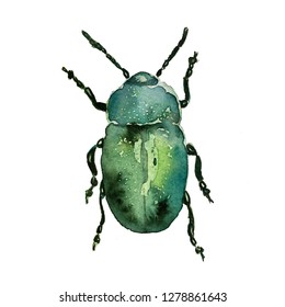 Hand drawn watercolor isolated bug