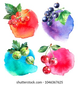 Hand drawn watercolor painted berries banners on white background. Illustration of black currant, red currant, gooseberry, cherry for packaging design