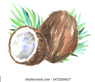 Hand drawn watercolor painting of fruit coconut with half os coconut isolated on white background.