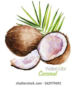 Hand drawn watercolor painting on white background. Tropical palm leaves with Coconuts isolated. Nature Fruit illustration. Eco vegan organic food