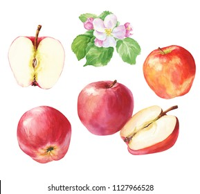 Hand drawn watercolor red apples set with cut half and flower blossom, isolated on white background. Delicious food illustration.