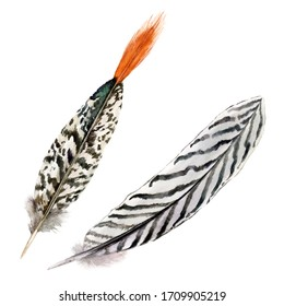 Hand drawn watercolor ritual meditation feathers set. Realistic feathers isolated on white background.