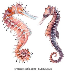 hand drawn watercolor seahorse. It's perfect for card, pattern design, postcard, banner, poster.