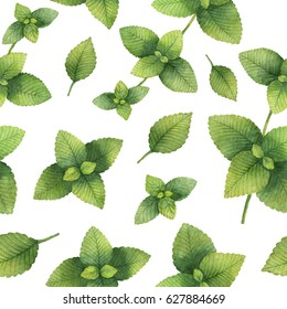 Hand drawn watercolor seamless pattern of Lemon balm. Healing Herbs for design of natural food, kitchen, textiles, market, menu.