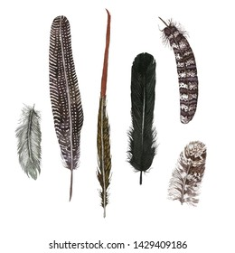 Hand drawn watercolor set with feathers.