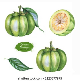 Hand drawn watercolor set of garcinia cambogia fresh fruit, isolated on white background. Healthy detox natural product superfood illustration