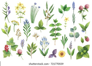 Hand drawn watercolor set green herbs and spices. Floral background for design of natural food, kitchen, market, textiles, decorations, cards.