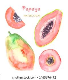 Hand drawn watercolor set papaya painting on white background. Watercolor illustration of fruit papaya.For logo and design.