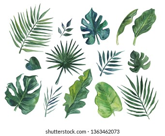 Hand drawn watercolor set of tropical leaves