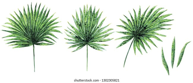 Hand drawn watercolor set of various green palm Brahea leaves, tropical and home plant, isolated on white
