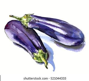 hand drawn watercolor sketch vegetables eggplant