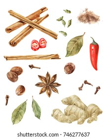 Hand drawn watercolor spices - cinnamon, cardamom, nutmeg, bay leaf, chilli pepper, anise star, cloves isolated on wite background
