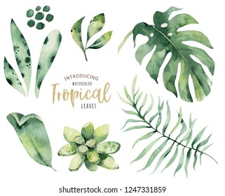 Hand drawn watercolor tropical plants set . Exotic palm leaves, jungle tree, brazil tropic botany elements and flowers. Perfect for fabric design. Aloha collection.