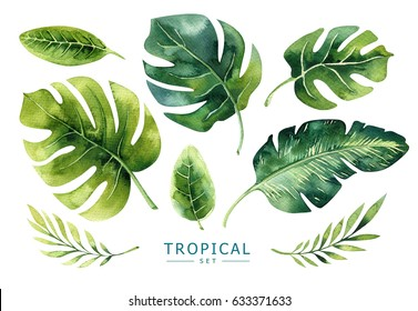 Hand drawn watercolor tropical plants set. Exotic palm leaves, jungle tree, brazil tropic borany elements. Perfect for fabric design. Aloha collection.