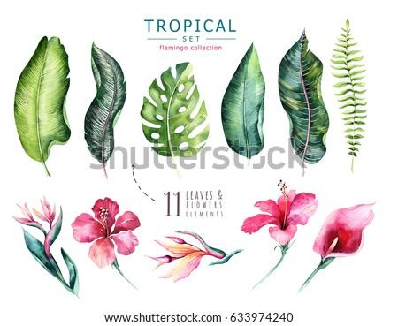 Hand Drawn Watercolor Tropical Plants Set Ilustración de ...