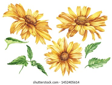 Hand drawn watercolor yellow flowers isolated on white background. Floral daisy illustration.