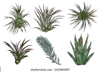 Hand drawn wild tropical house Succulent plants set. Scandinavian mood home decor creator. Elements for card design. Air plants for terrarium. Raster