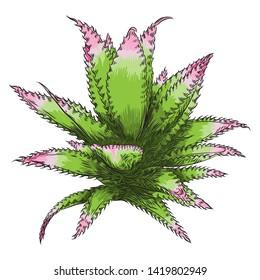 Hand drawn wild tropical house Succulent plant. Scandinavian mood element for card design. Air plant for terrarium. Raster