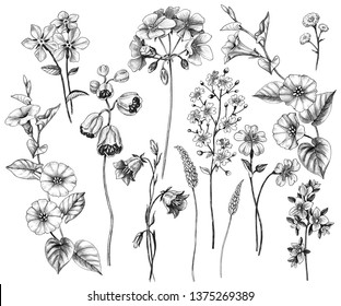 Hand drawn wildflowers set isolated on white background. Pencil drawing monochrome wild plants floral elements.