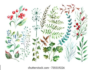 Hand drown watercolor set of colorful floral plants.