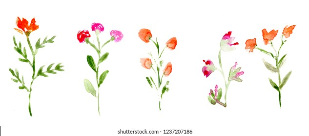 hand made watercolor meadow flowers on white background / painted florals for invitation or greeting card