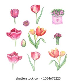 Hand paint set of watercolor tulips solated on white background