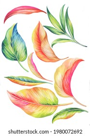 hand painted artistic set with multicolor vibrant botanical tropical leaves. compilation of foliage on white background.