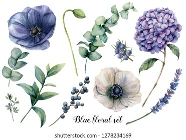 Hand painted blue floral elements. Watercolor botanical illustration with anemone, hydrangea flowers, lavender, juniper, berries and eucalyptus leaves isolated on white background for design.