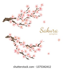 Hand painted card with sakura flowers and branches. Watercolor springtime illustration isolated on white background. Natural card design.