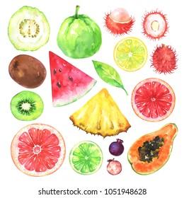 Hand painted exotic fruits set. Watercolor collection of kiwi, watermelon, guava, rambutan, amelanchier, grapefruit, blood orange, lemon, papaya, pineapple, lime and leaf isolated on white background