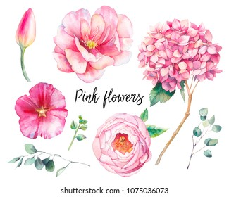 Hand painted floral elements set. Watercolor botanical illustration of tulip, peony, hydrangea flowers and eucalyptus leaves. Natural objects isolated on white background