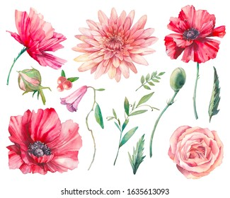 Hand painted floral elements set. Watercolor botanical illustration of poppy, bellflower, rose flowers and leaves. Natural objects isolated on white background
