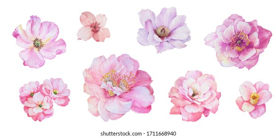 Hand painted floral elements set. Watercolor botanical illustration of eucalyptus, tulip, peony, rose,anemone flowers and leaves. Natural objects isolated on white background