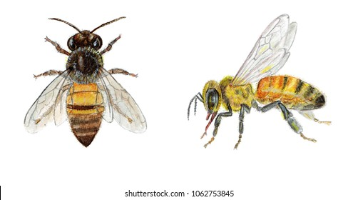 honey bee sketch images  stock photos   vectors shutterstock brunch clip art borders free brunch clip art free