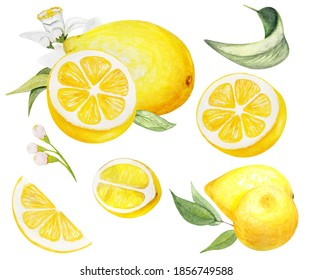 Hand painted Lemon set . Watercolor whole lemons, halfs lemon, lemon wedges, lemon  leaves and flowers