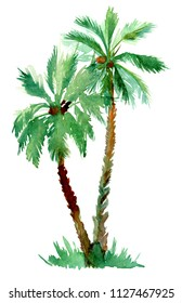 Hand painted palm tree. Real watercolor painting on a paper.