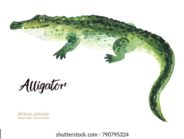 Hand painted realistic African illustration animals isolated on white background. Alligator