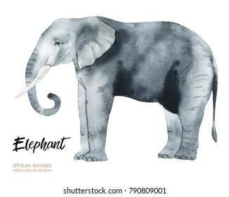 Hand painted realistic African illustration animals isolated on white background. Elephant