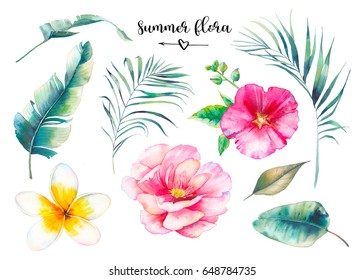 Hand painted summer flora set. Watercolor floral illustration of palm tree branches, peony, frangipani flower and banana leaves. Plants isolated on white background