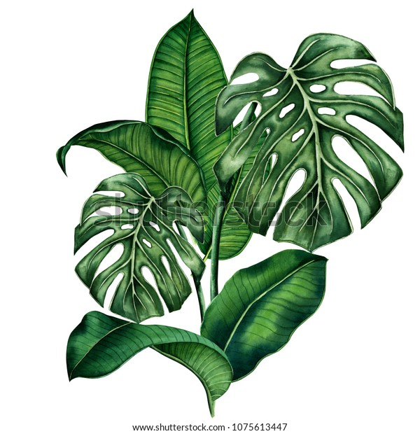 Hand Painted Watercolor Botanical Tropical Leaves Stock Illustration 1075613447 Tropical art tropical design tropical pattern tropical leaves tropical flowers tropical plants you are an artist not just when you paint, but you can be one in so many ways. https www shutterstock com image illustration hand painted watercolor botanical tropical leaves 1075613447