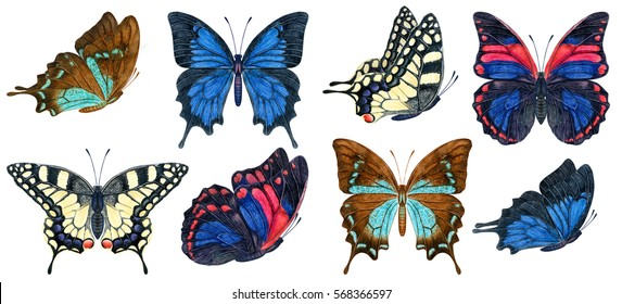 hand painted watercolor detailed tropical butterfly painting. botanical drawing illustration. insects collection.
