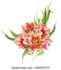 Hand Painted Watercolor Floral Illustration Flower Arrangements Blooming Tulip Composition Realistic Painting Invitation Clipart Design Card Corner Element