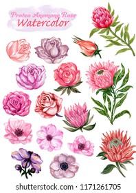 Hand painted watercolor gouache vintage romantic  floral rose anemone protea and leaves element set