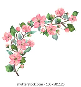 Hand painted watercolor illustration of a curved blooming cherry branch with large flowers, small beautiful buds and green and blue leaves