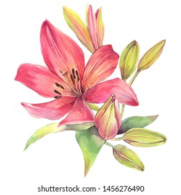 Hand painted watercolor illustration.  Сomposition with pink lily flowers.