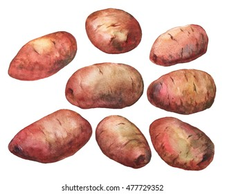 Hand painted watercolor illustration of potatoes on white background