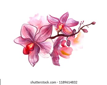 Hand painted watercolor illustration simbol of Singapore orchid