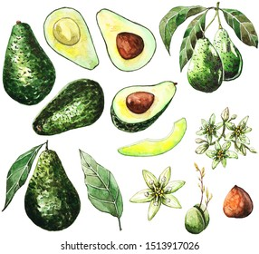 Hand painted watercolor paintings of avocado sat and blossom, a half, a leaf.