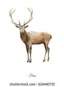 Hand painted watercolor poster with deer isolated on white background