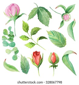 Hand painted watercolor roses, peony and leaves. Isolated floral clip art. DIY collection of flower
